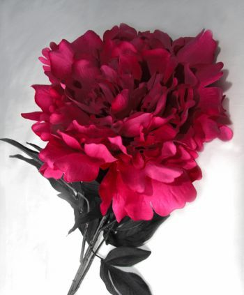 Peony Rose Single Stem
