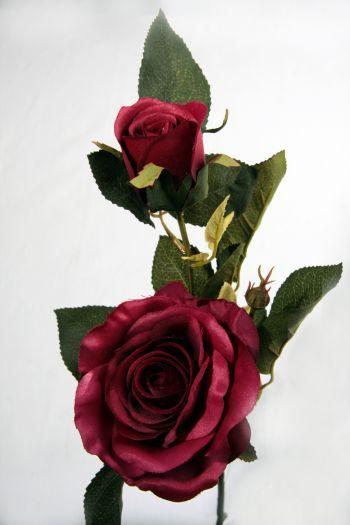 Canterbury Rose Single Stem