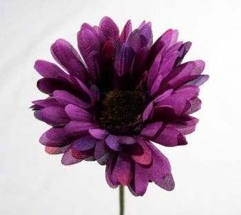 Gerbera Sage Decor