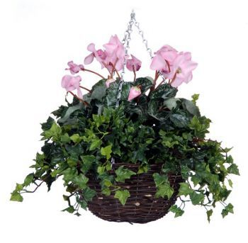 Cyclamen Standard Baskets