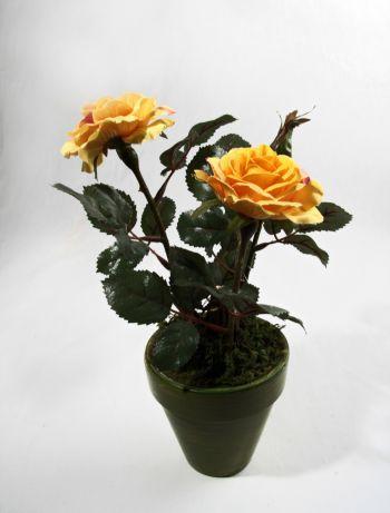 Rose (Barolo)