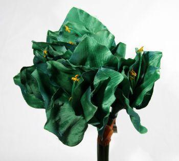 Amaryllis Oriential