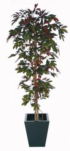 Capensia Deluxe Liana Tree IFR