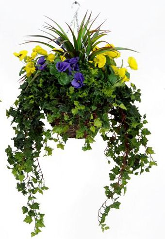 Pansy Large Baskets 45cm W