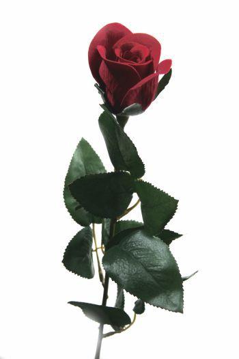 Velvet Rose Bud