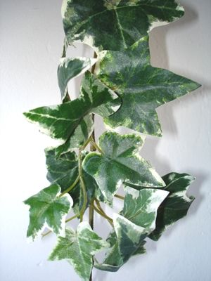 Ivy Garlands