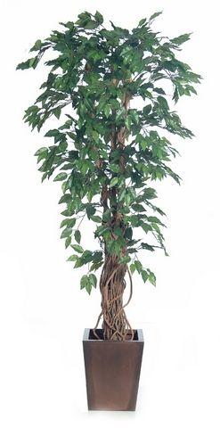 Ficus Economy