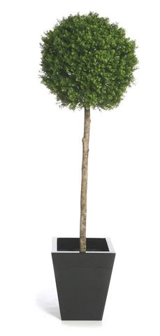 Topiary Buxus Single Ball