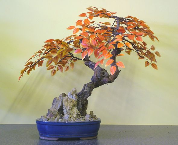 Artificial Beech Bonsai Tree Just Artificial