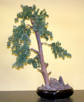 Fir Bonsai Tree