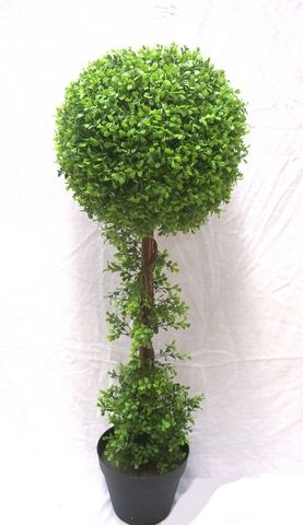 Boxwood Single Ball Tree