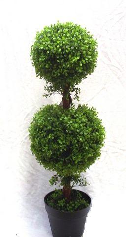 Boxwood Double Ball Tree