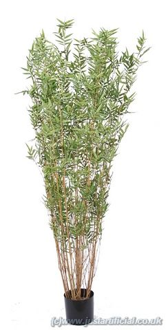 Bamboo Oriental Multi Tree