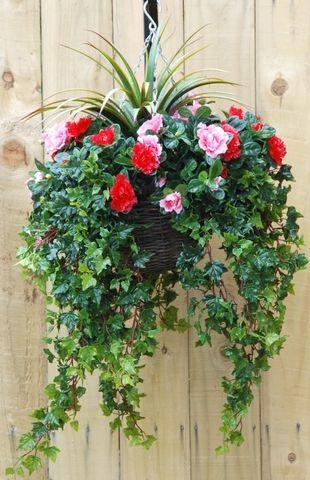 Azalea Hanging Basket