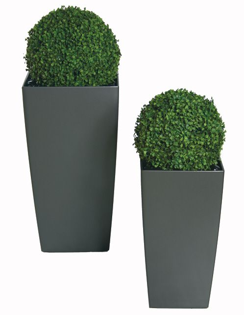 Showing 2 Boxwood Balls in Planters for illustration purposes