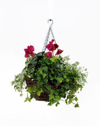 Cyclamen Hanging Basket