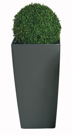 Boxwood Balls - Large