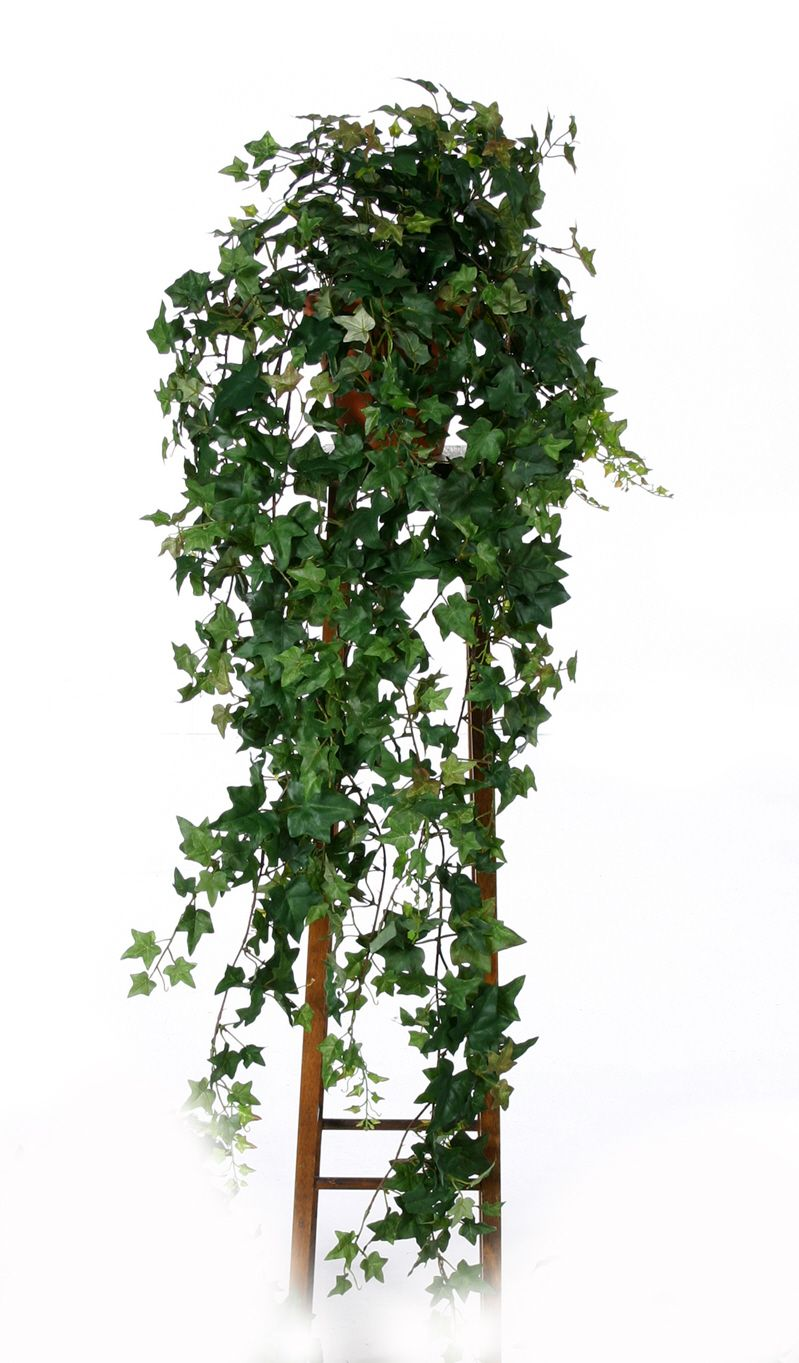 artificial silk trailing ivy just artificial. Black Bedroom Furniture Sets. Home Design Ideas