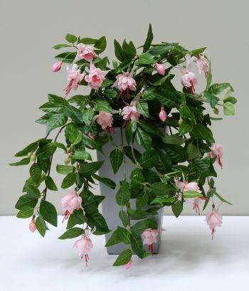 Fuchsia-Trailing