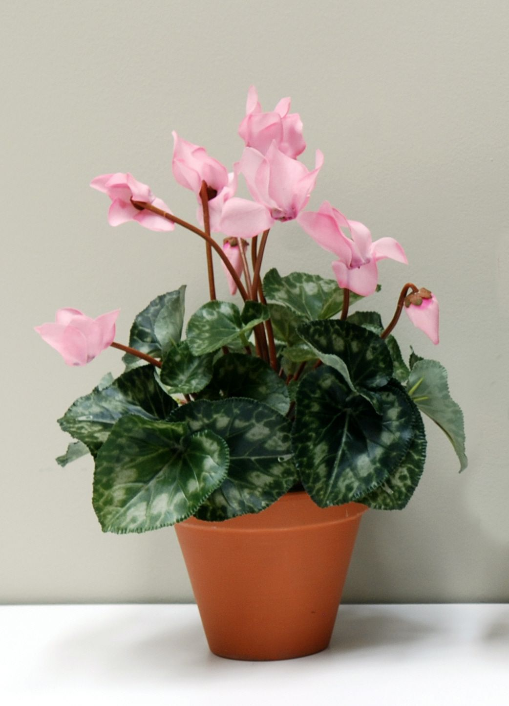Https Www Justartificial Co Uk Artificial And Silk Flowers T1v3 Cyclamen Bush P113141 Productview
