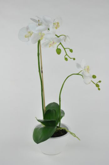 Phalaenopsis in White Bowl Arrangement