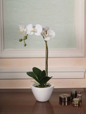 Phalaenopsis in White Bowl Arrangement