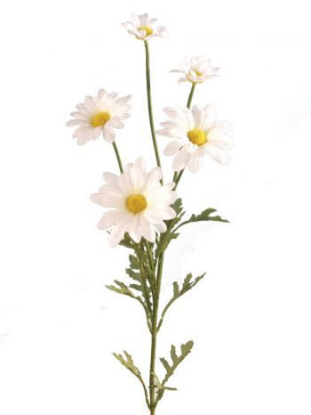 Daisy Marguerite Spray