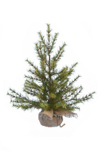 Colorado Fir Tree In Sack