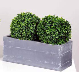 Double Topiary Boxwood Ball Plants in Troughs