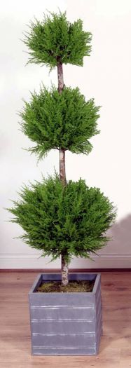 Cedar Triple Ball Tree in Lead Look Planter