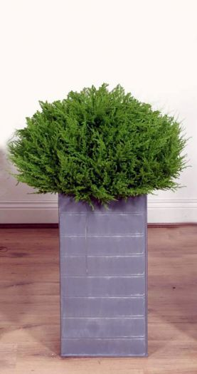 Cedar Bush Ball in Lead Look Planter