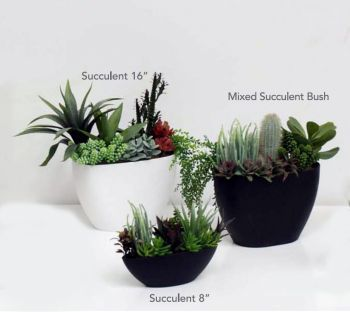 Mixed Succulent Plants