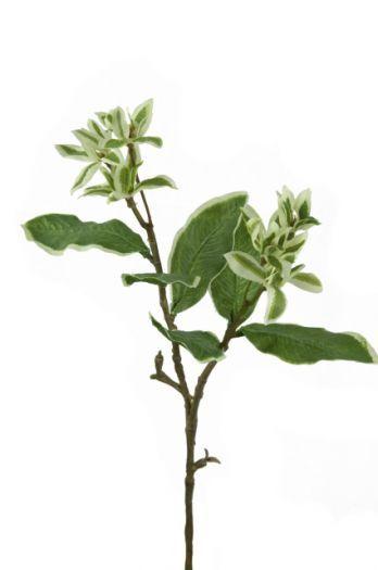 Mini Euphorbia Spray