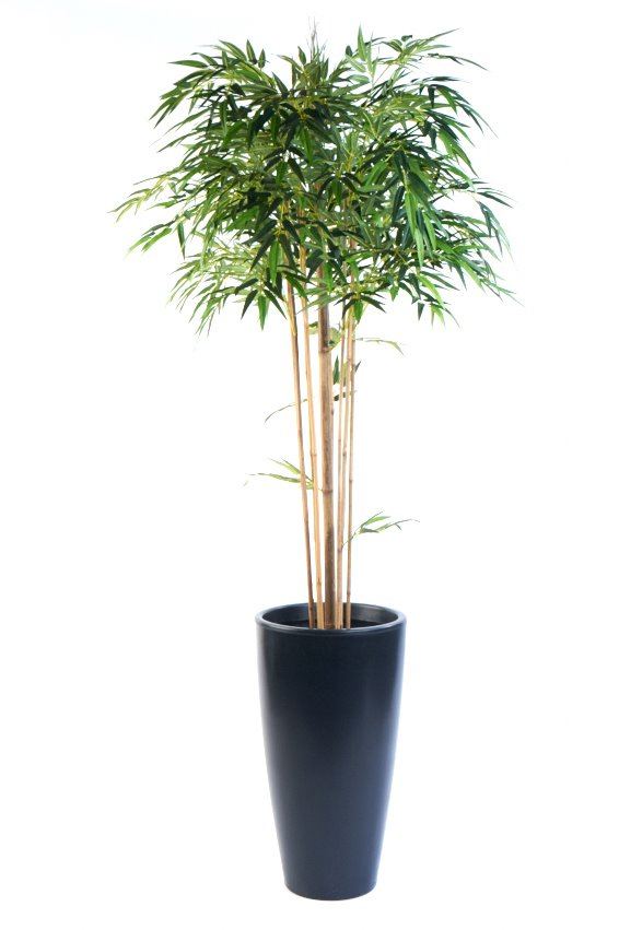 Our Artificial Bamboo Mophead FR tree with Natural Stems