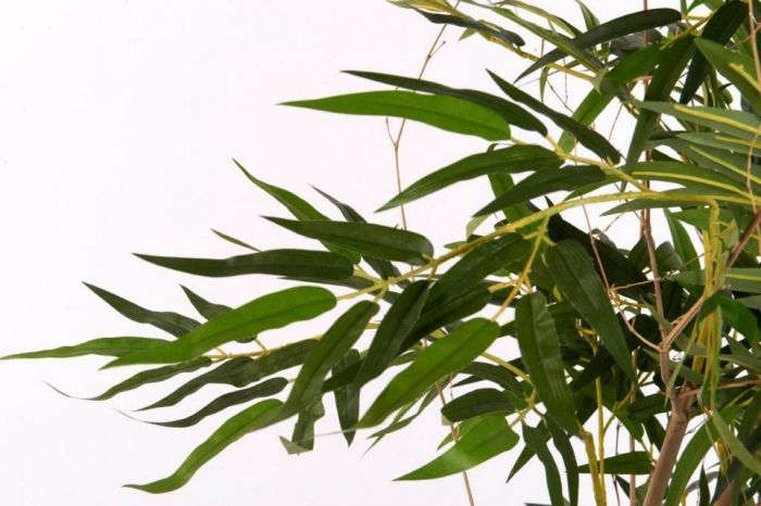 close up of the Fire Retardant Silk Bamboo foliage