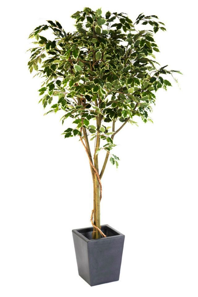 artificial silk ficus benjamina vine tree fr just artificial. Black Bedroom Furniture Sets. Home Design Ideas