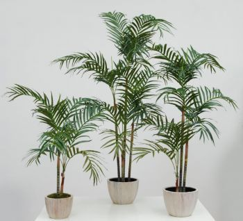 Areca Palm in Cream Leaf Planter