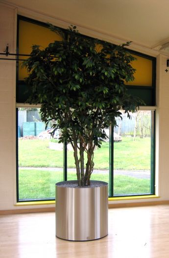 Handmade Ficus Tree