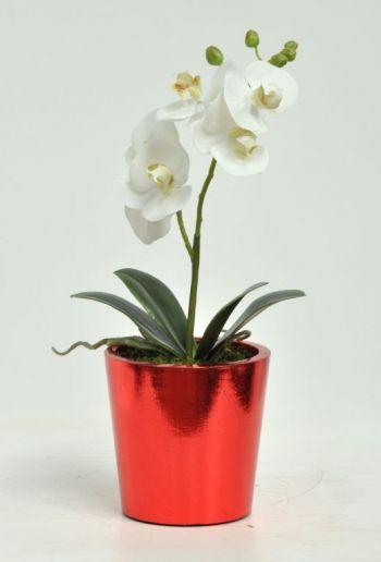 Orchid Phalaenopsis Single Arrangement