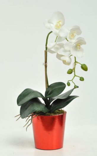 Orchid Phalaenopsis Single Arrangement