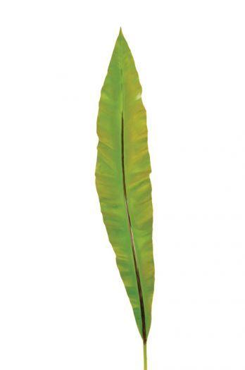 Asplenium Leaf