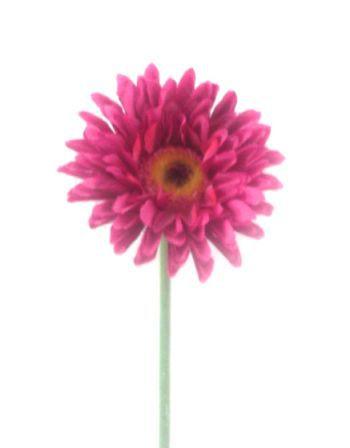 Mini Gerbera Flower