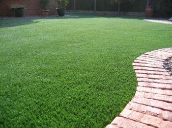 Classic Lawn Grass