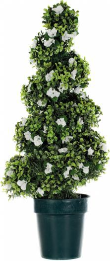 Dogwood Spiral Topiary Tree