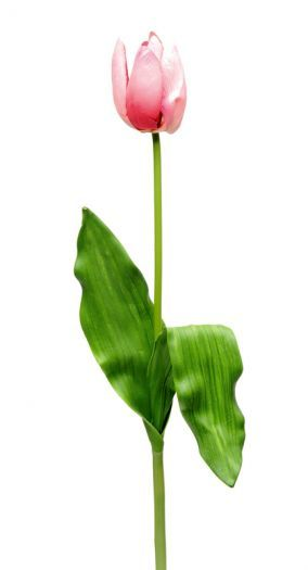 Tulip Spray Single Stem