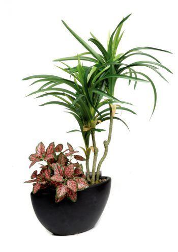 Yucca in Ceramic Pot