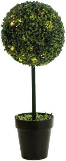 Boxwood Single Ball Topiary Tree