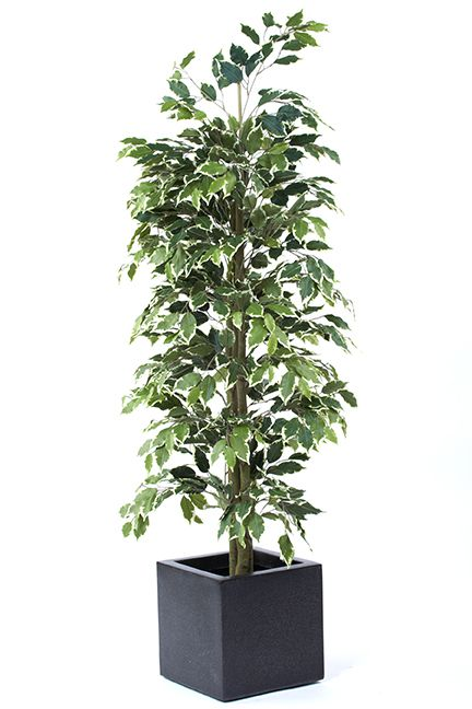 Showing our Artificial Silk Ficus Cane Tree FR, (in a planter for illustration purposes only).