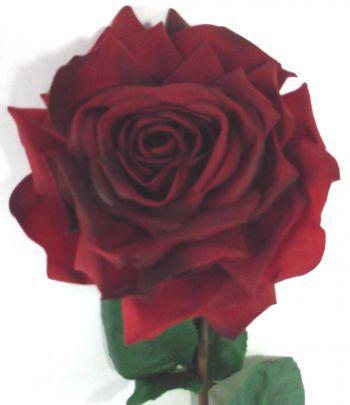 Duchess Open Rose