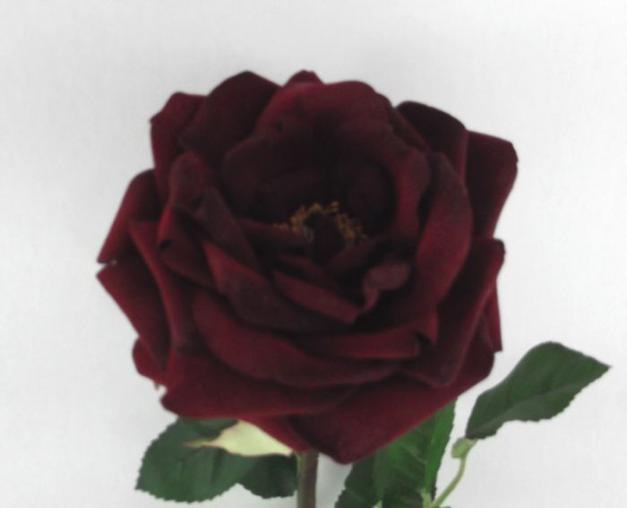 Artificial Velvet Rose Single Stem - 61cm Red